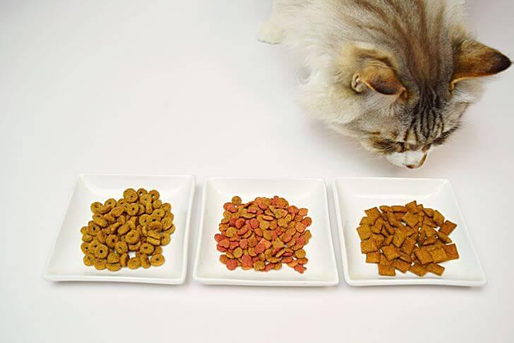 キャットフード自体が原因で猫がエサを食べない場合
