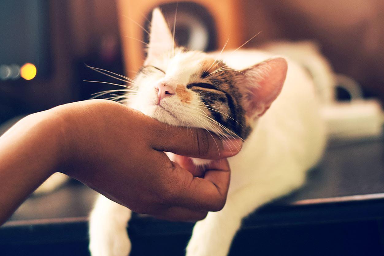 猫のスプレー行為を繰り返さないためにも対策しよう