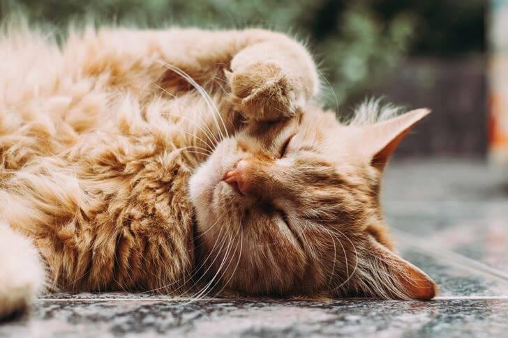 猫が好きな『マタタビ』についての概要