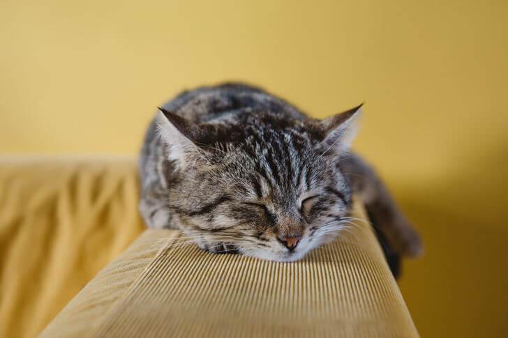 猫のマタタビの効果とは?