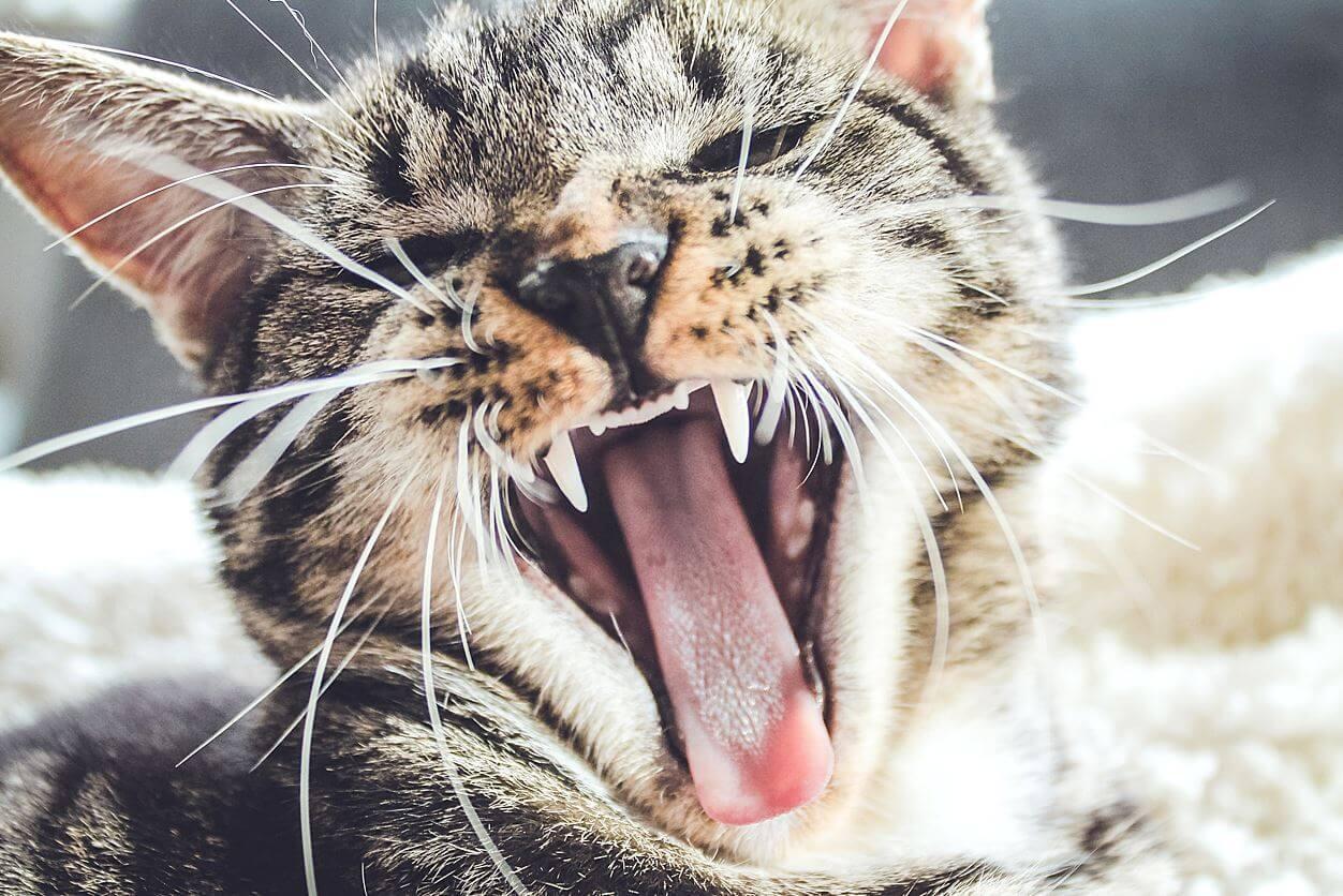 ストレスにより猫がエサを食べない場合