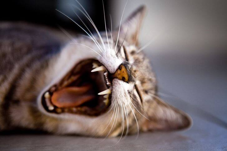 猫が返事する意味とは?呼びかけても気分によって反応が異なります