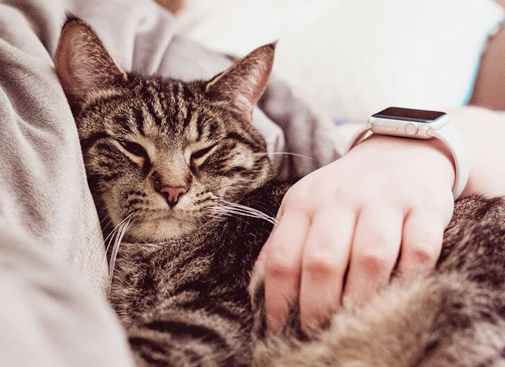 猫のストレスの原因を知って予防し、こまめに解消するのがベスト