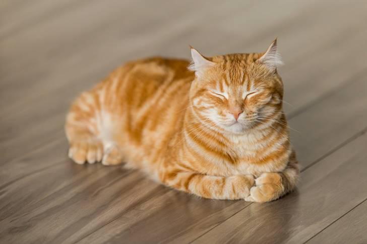 猫にマタタビはあげすぎず、適度に適量を与えるようにしましょう