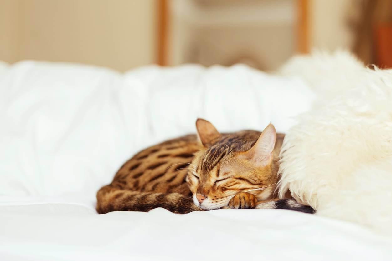 【猫の寝方】猫の寝相からわかる3つのこと【香箱座り】