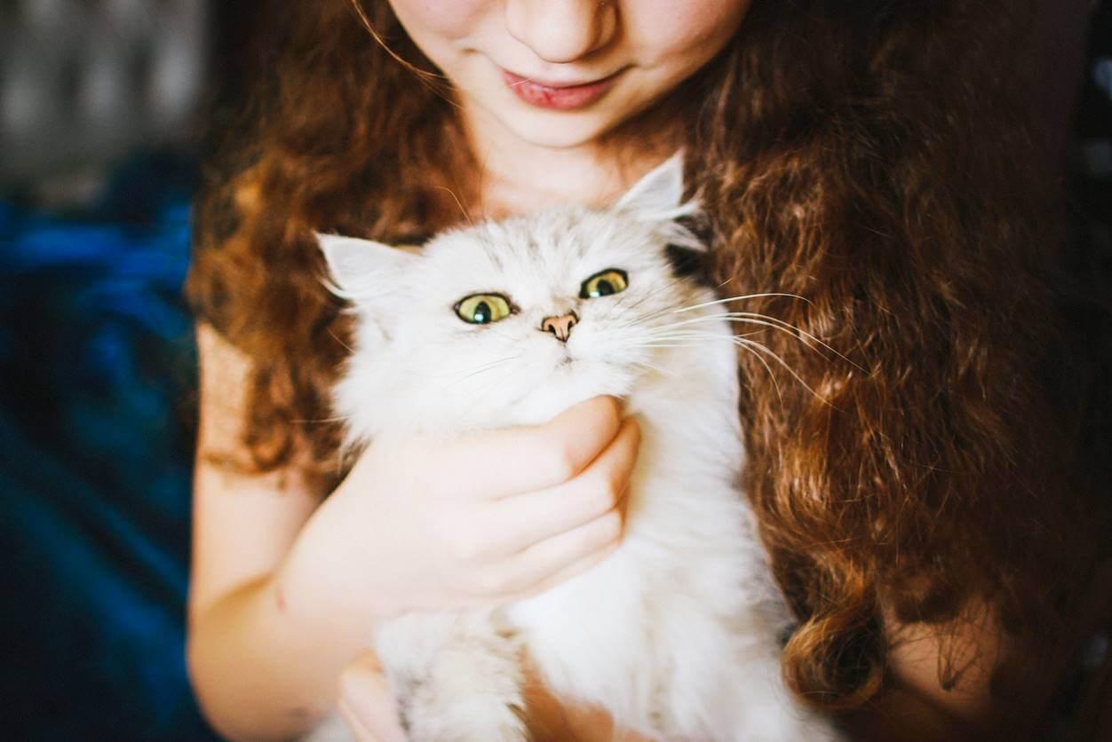 猫がエサを食べない理由は?水は飲むなら病気以外にも原因があります