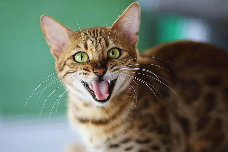 猫が爪とぎをする理由は5つあります
