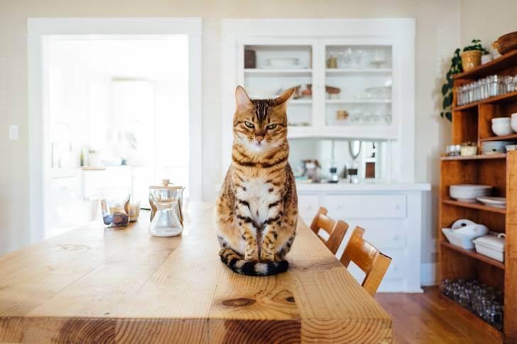 猫のマタタビの与え方。子猫でも大丈夫?