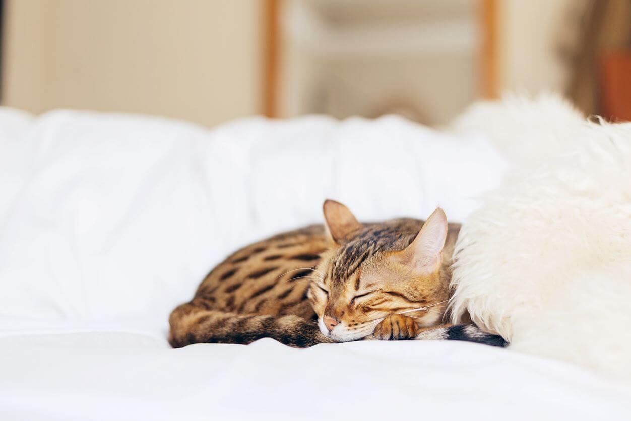 猫はどこで寝ているの? 快適で安心して眠れる場所を用意しよう