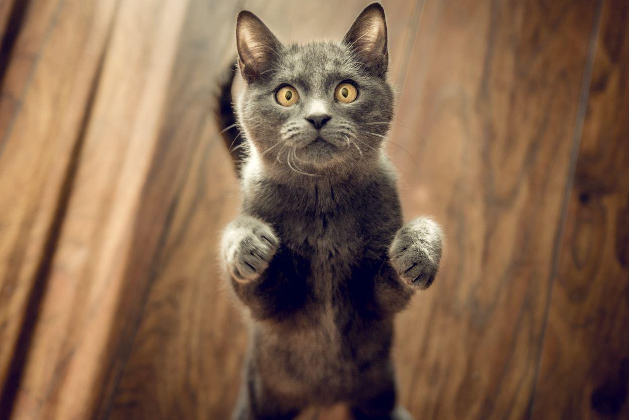 【概要】猫はなぜスプレー行為をするのか?