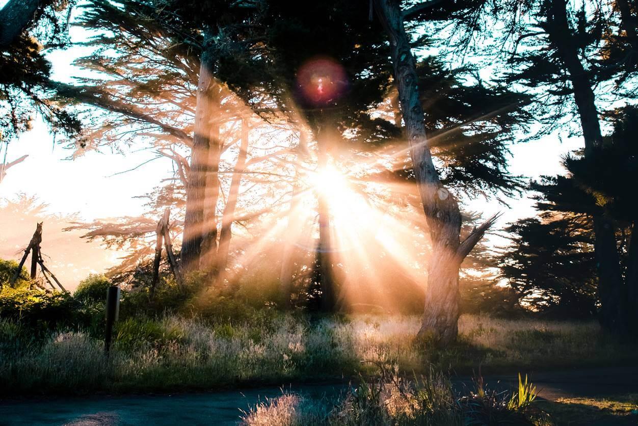 【早く寝る方法:4】起床後すぐに太陽の光を浴びる(セロトニンの分泌を促す)