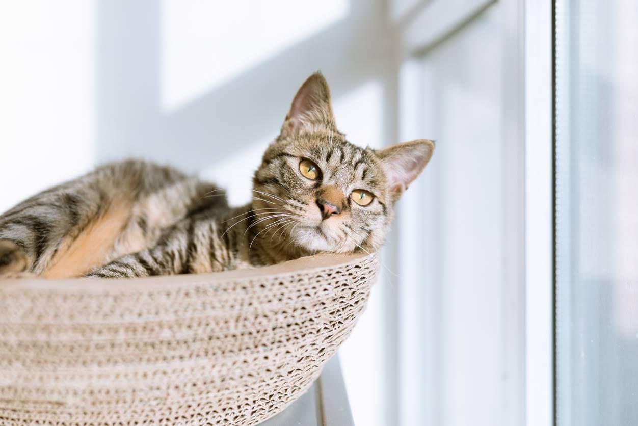 猫の留守番の注意点11個。仕事や旅行で2~3日家を空けても大丈夫?