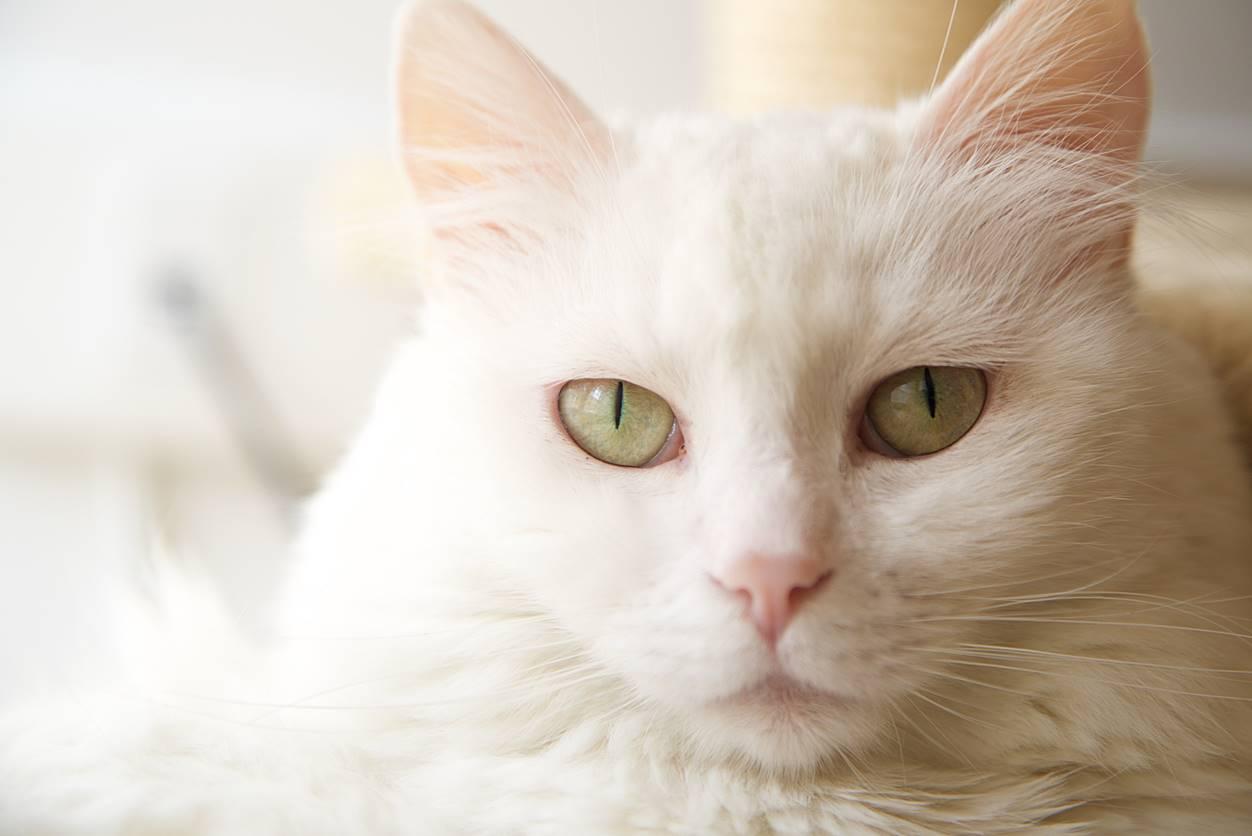 世界猫の日は8月8日って本当?【日本の猫の日は2月22日】