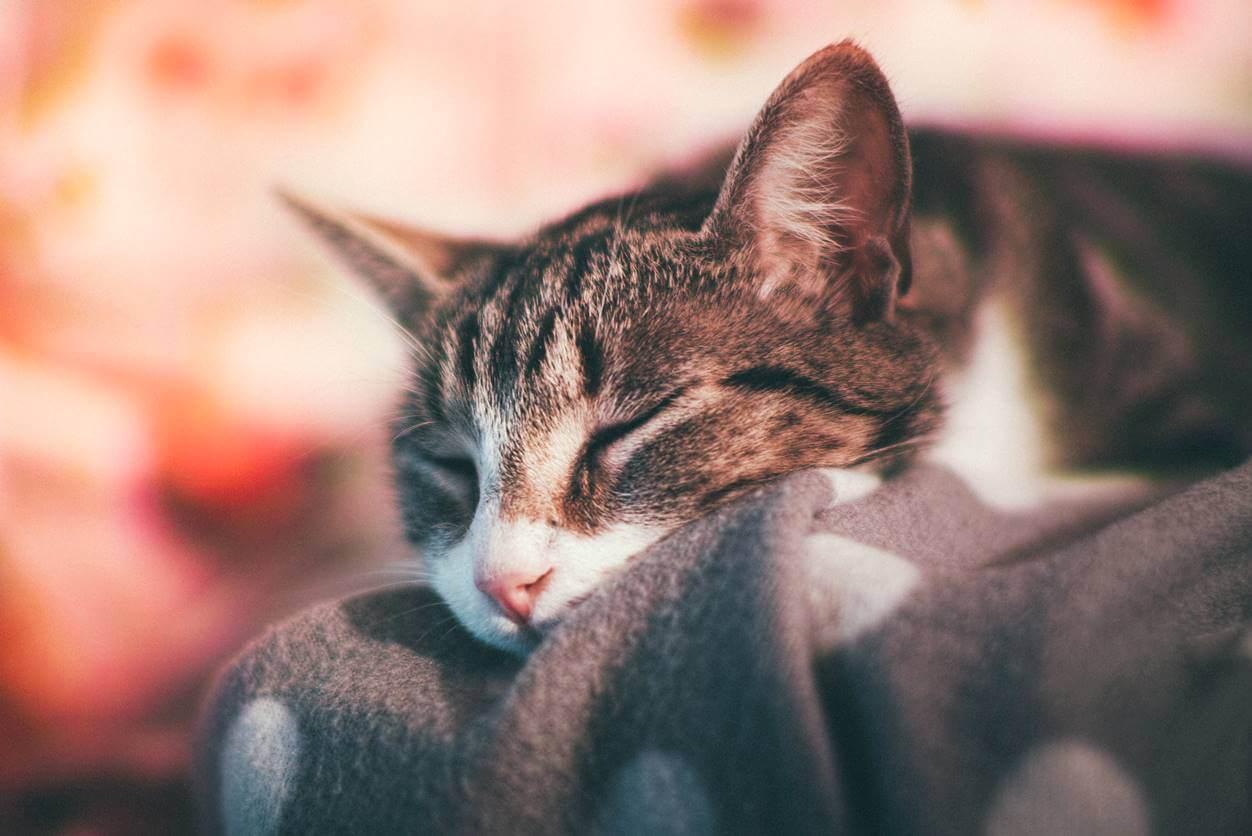 昼寝の時間は長いとダメ?食後は短めの睡眠で心身をリフレッシュしよう