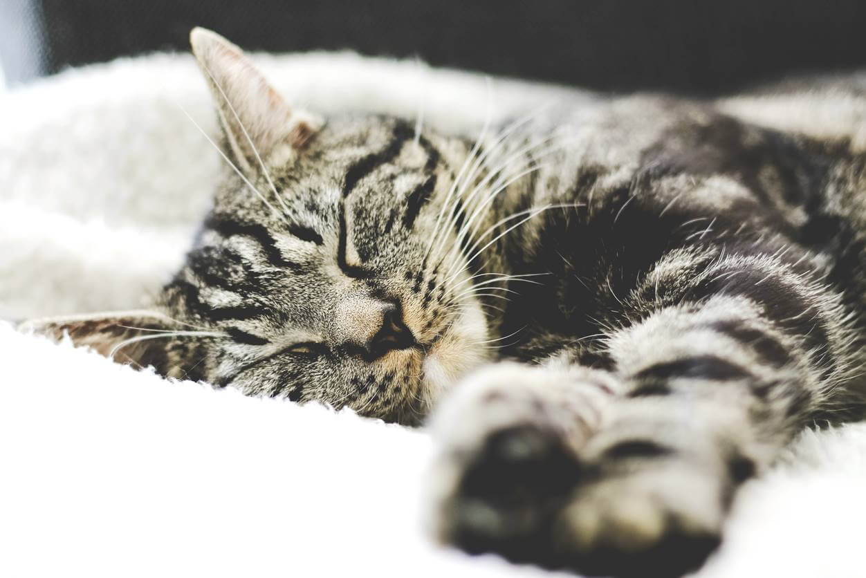【猫がずっと寝てる】猫の睡眠時間は人間の2倍って大丈夫なの?