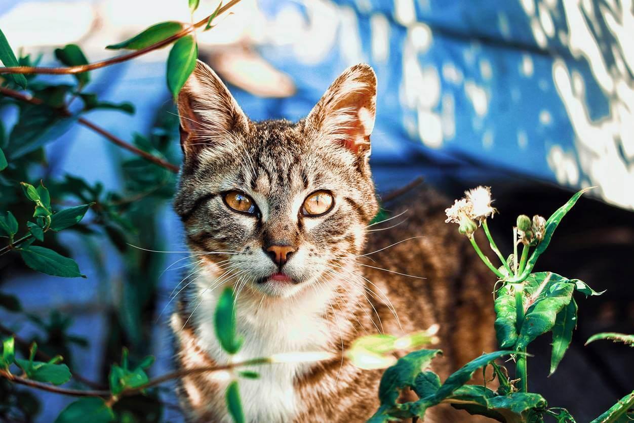 猫のストレスの解消法5選!ストレスの原因を知って対策しよう