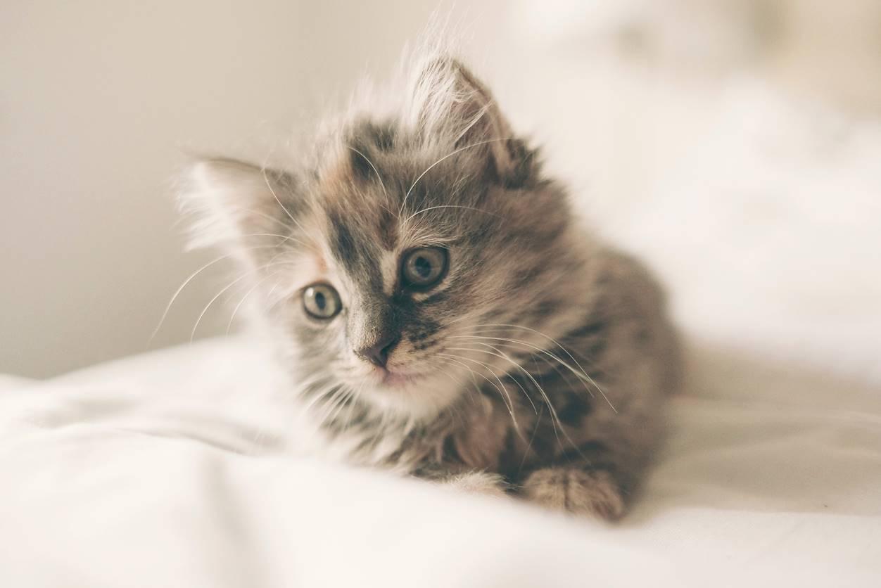 猫がモミモミする意味は?【ミルクトレッド】