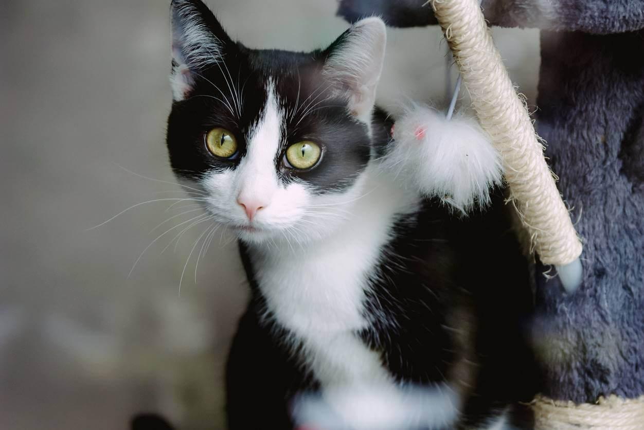 猫が爪とぎをする理由は?おすすめの対策方法4選【爪とぎグッズも紹介】